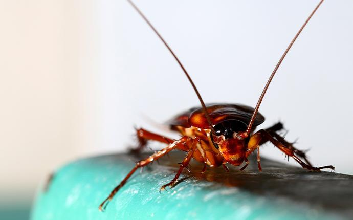 a cockroach crawling in a reistertown maryland basement