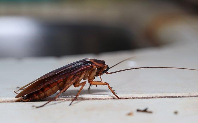 a cockroach crawling in a kitchen in catonsville maryland