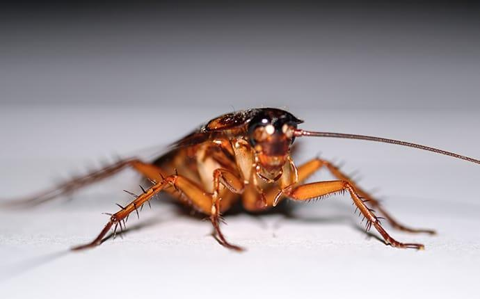 a cockroach crawling in an ellicott city maryland basement