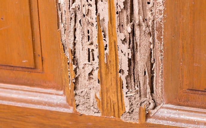 termite damage in wood trim in an ellicott city maryland home