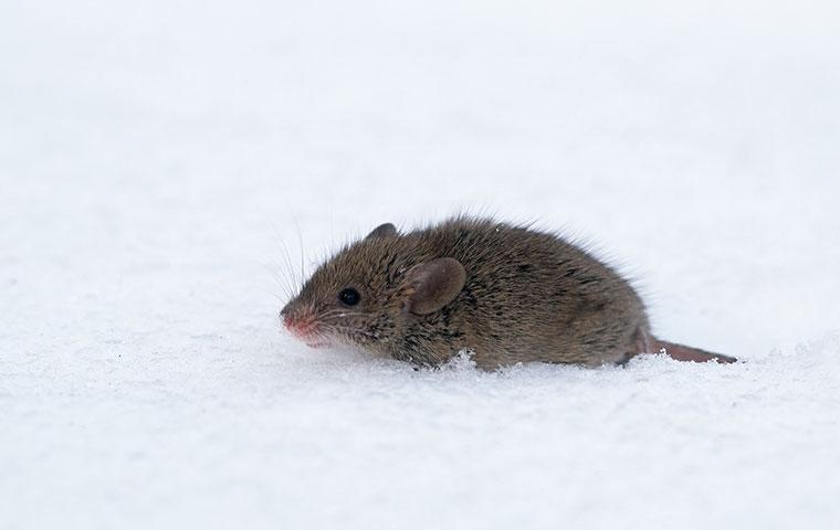 5 Things You Can Do To Avoid Rodents In Columbia This Winter
