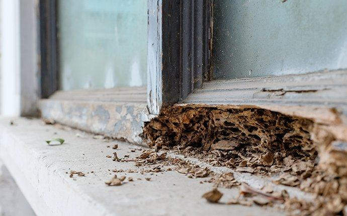 termite damage on the structural wood of a home in columbia maryland