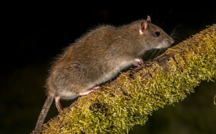 a rat crawling on a tree trunk outside of a home