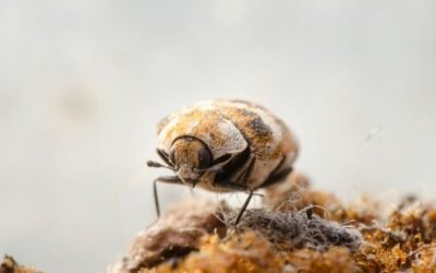 Do Carpet Beetles Bite? Here's Everything You Need To Know