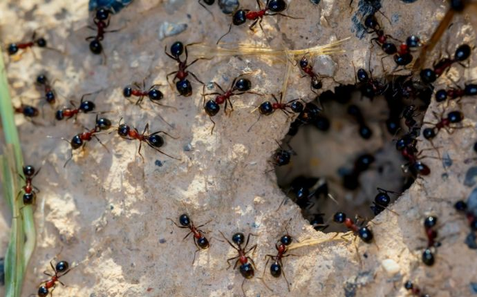 ants on the ground