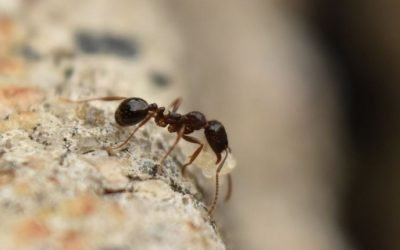 A Step-by-Step Guide to Ant Control for Baltimore Homeowners