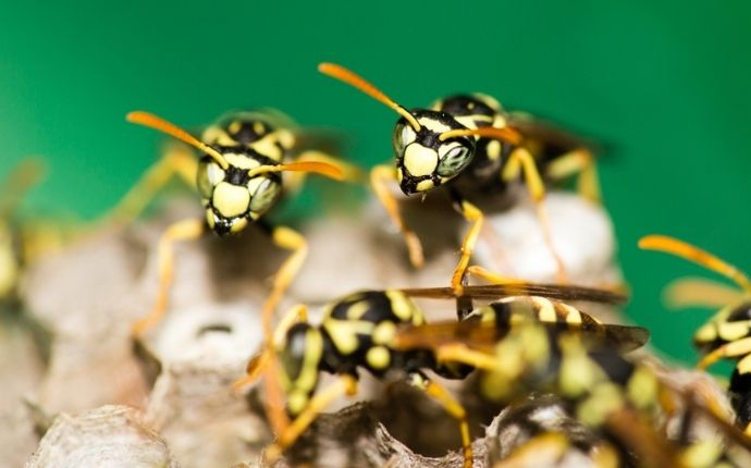 selective focus of wasps in their nest