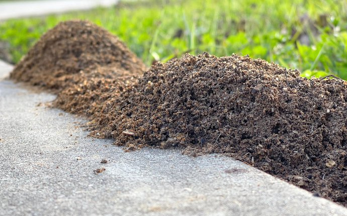 Fire ant mounds overflowing from the grass onto a sidewalk.