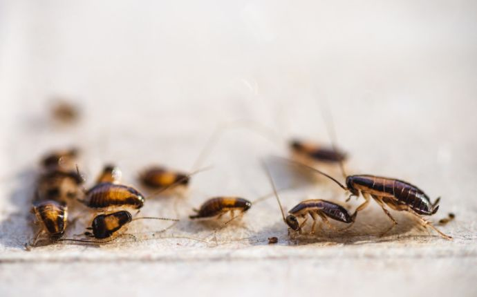 A group of cockroaches on a white surface