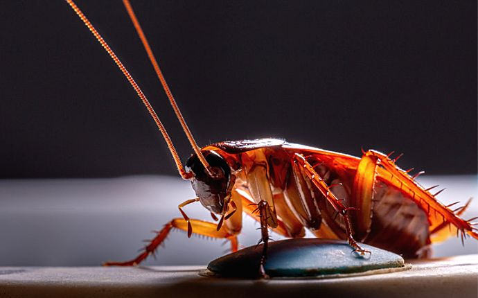 Close-up of a large cockroach on the side of a sink