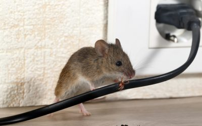 The 5 Quickest Ways to Get Rid of Mice in Baltimore Homes